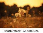 grass flower with sunset light. ... | Shutterstock . vector #614883026