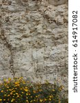 Small photo of Flowers against the background of the cliff Flowers against the background of the cliff