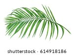 Watercolor Painting Palm Leaf ...