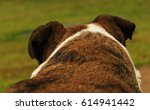 dog back   Shutterstock . vector #614941442