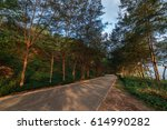road with pine trees on the... | Shutterstock . vector #614990282
