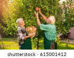man and woman picking apples.... | Shutterstock . vector #615001412