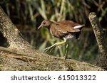 common moorhen  gallinula... | Shutterstock . vector #615013322