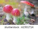 Red Mushroom  Amanita Muscaria...
