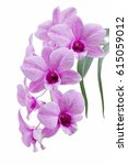orchid isolated on white... | Shutterstock . vector #615059012