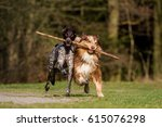 Two Dogs Running Holding And...