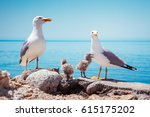 bird's nest on the atlantic... | Shutterstock . vector #615175202