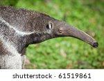giant anteater  myrmecophaga... | Shutterstock . vector #61519861