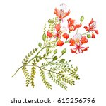 watercolor tropical flower  ... | Shutterstock . vector #615256796