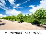 alley of topiary green trees... | Shutterstock . vector #615275096