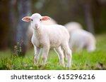 lamb grazing on green grass... | Shutterstock . vector #615296216