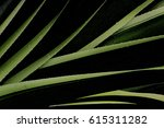 Tropical Green Leaves And...
