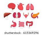 organ vector illustration | Shutterstock .eps vector #615369296