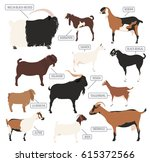 goat breeds icon set. animal... | Shutterstock .eps vector #615372566