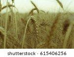 field of golden wheat ears on... | Shutterstock . vector #615406256