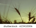 gold ears of wheat close up on... | Shutterstock . vector #615410306