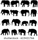 black and white african elephant and asian elephant silhouette contour