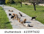 Many Feral Cats Are Eating...