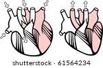vector human heart | Shutterstock .eps vector #61564234