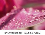 Blurred Droplets Of Water On...
