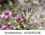 Sail Swallowtail Sitting On A...