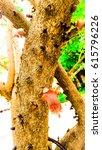 the tree | Shutterstock . vector #615796226
