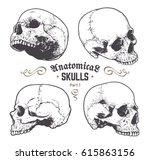 anatomical skulls vector set.... | Shutterstock .eps vector #615863156