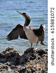 Small photo of African Darter bird in Majorca