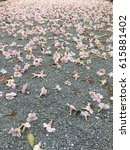 Small photo of Pink Tecoma on the floor.