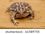 Brown toad  (Bufo gargarizans) - close-up with shallow depth of focus - stock photo