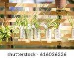 potted plants in the garden.   Shutterstock . vector #616036226
