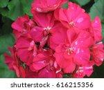 flower in the garden spring... | Shutterstock . vector #616215356