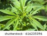 grass | Shutterstock . vector #616235396