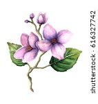 Watercolor Lilac Flowers On...
