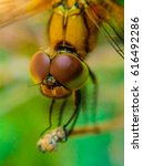 Small photo of Dragon fly