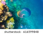 variety of soft and hard coral...   Shutterstock . vector #616599848