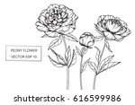 hand drawing peony flowers. | Shutterstock .eps vector #616599986