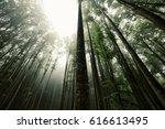 foggy beech forest   Shutterstock . vector #616613495
