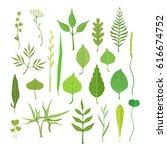 fresh green leaves from trees ... | Shutterstock .eps vector #616674752