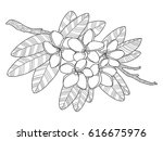 plumeria flowers coloring book...
