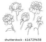 peony flower isolated on white... | Shutterstock .eps vector #616729658