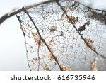 a skeleton leaf marks the end... | Shutterstock . vector #616735946