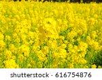 field mustard of tokyo... | Shutterstock . vector #616754876