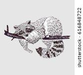 raccoon  vector illustration.... | Shutterstock .eps vector #616848722