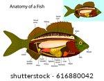 anatomy of a fish. fish...