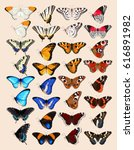 collection of butterflies | Shutterstock .eps vector #616891982