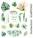 tropical leafy collection.... | Shutterstock . vector #616892465