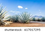 landscape of planting of agave... | Shutterstock . vector #617017295