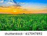 beautiful morning sunrise over... | Shutterstock . vector #617047892