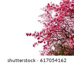 Tree With Pink Flowers On Whit...